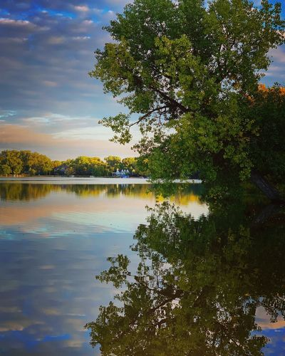 Tree Water Plant Reflection Lake Tranquility Beauty In Nature Sky Scenics - Nature Tranquil Scene Nature No People Waterfront Idyllic Outdoors Cloud - Sky Green Color Day Reflection Lake