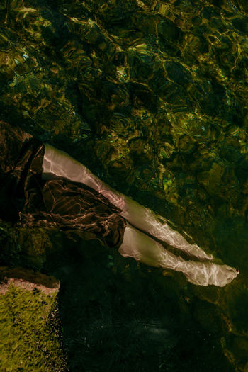 Digital composite image of leaves floating on water