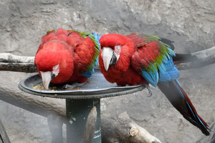 Close-up of parrots perching on feeder