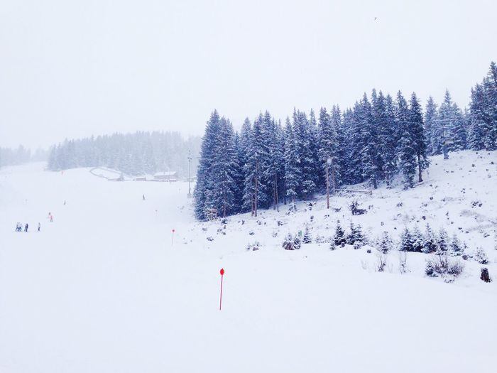 Winter Snow Forest White Red View Skiing Check This Out Relaxing Enjoying Life Traveling
