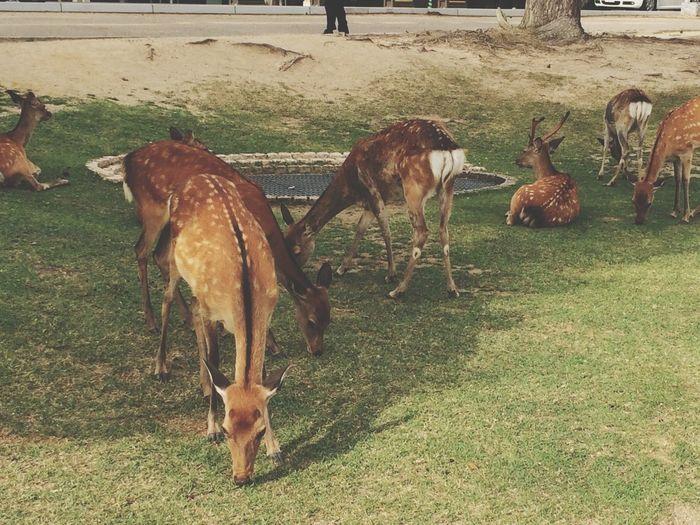 Deer A Walk In The Park