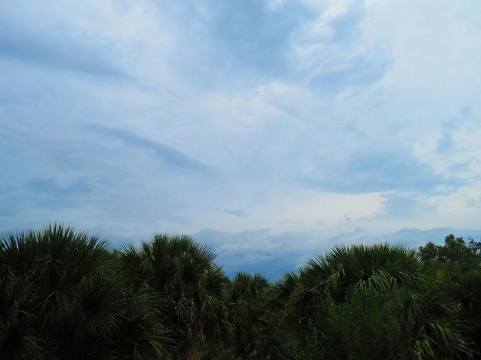Storm approaching Tree Palm Tree Forest Blue Sky Cloud - Sky Treetop Tree Area Storm Cloud Thunderstorm Storm