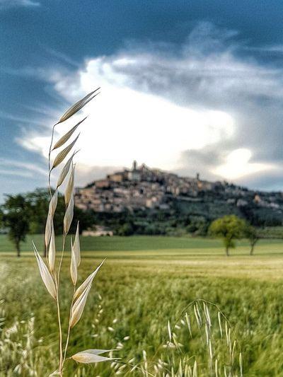 Trevi, Umbria, Italy, hilltop The Week On EyeEm