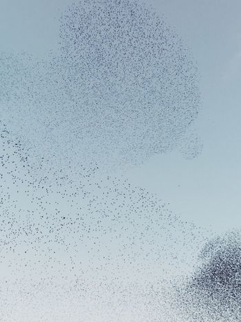Thousands of birds No People Full Frame Backgrounds Nature Day Close-up Beauty In Nature Outdoors Sky Water Trynidada Florence Italy Murmuration Firenze The Week On EyeEm Editor's Picks
