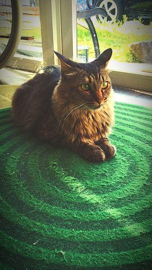 Cat Senmu 専務