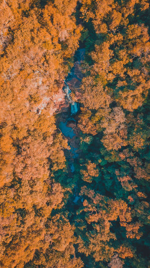 Aerial view of trees in forest