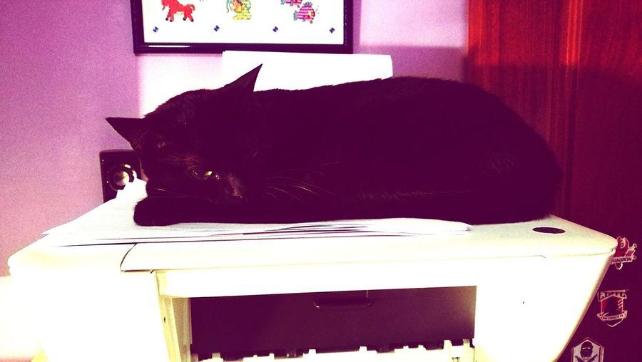 Mi impresora 3d Pets Domestic Cat First Eyeem Photo