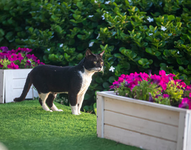 View of a cat on green plants