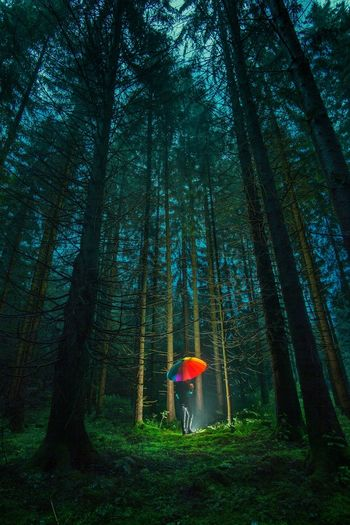 Man standing with umbrella amidst trees in forest