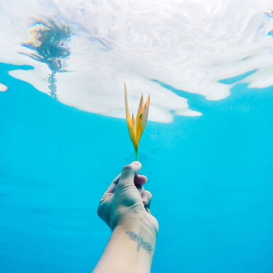 Was playing around with underwater shots using my gopro. I took this looking up at the sky while submerged 4ft down. The hardest part was staying submerged long enough. I found that the trick to staying under is breathing out all the air in you. Underwater Art Surreal Underwater Photography Flower Gopro nd selfie] Goprohero4 The Moment - 2015 EyeEm Awards Fine Art Photography