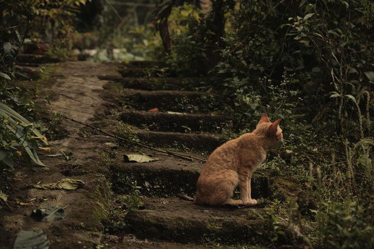Cat sitting on a land