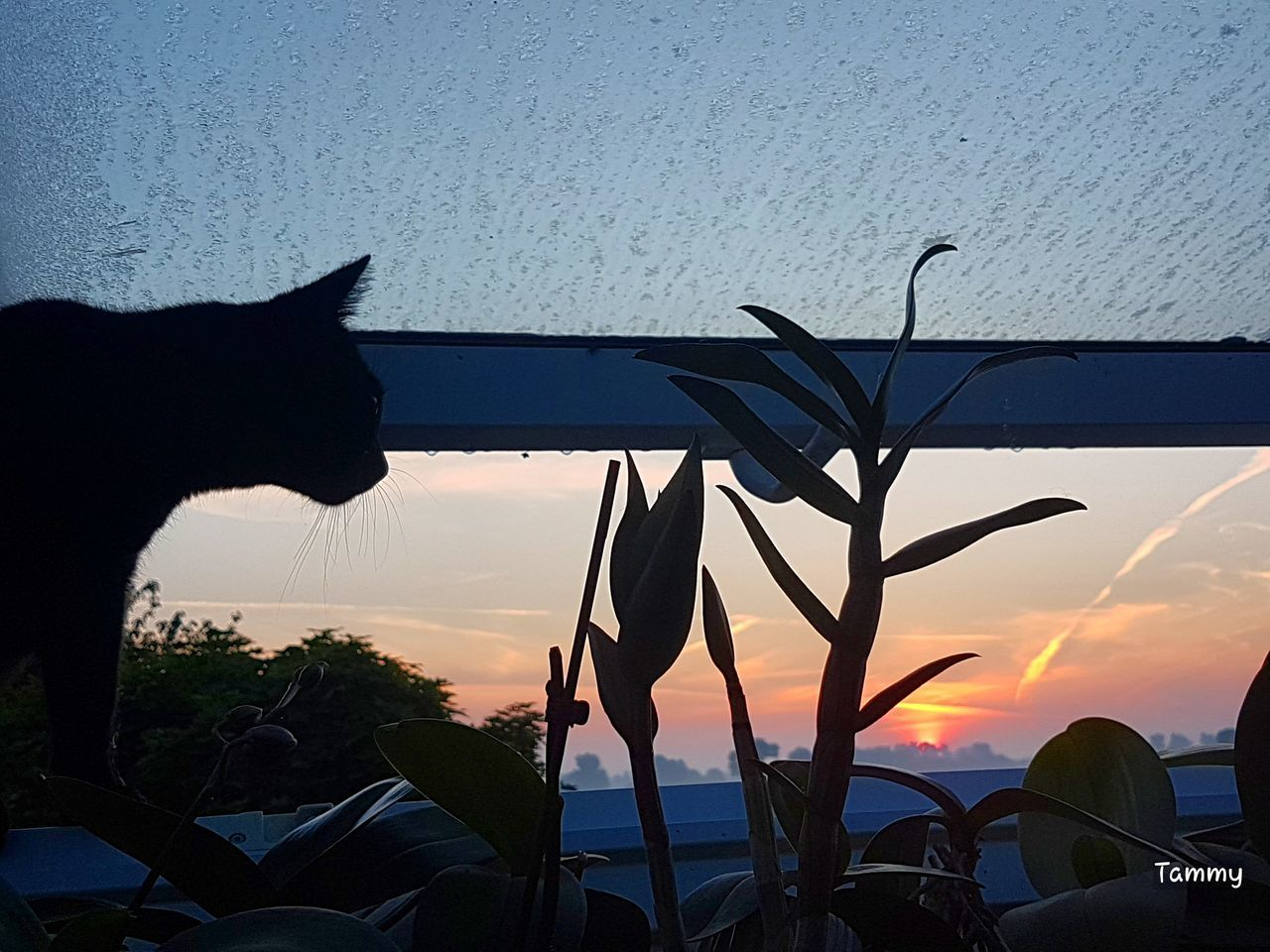 nature, sunset, plant, growth, mammal, animal themes, one animal, domestic animals, silhouette, no people, beauty in nature, outdoors, sky, tree, day, close-up