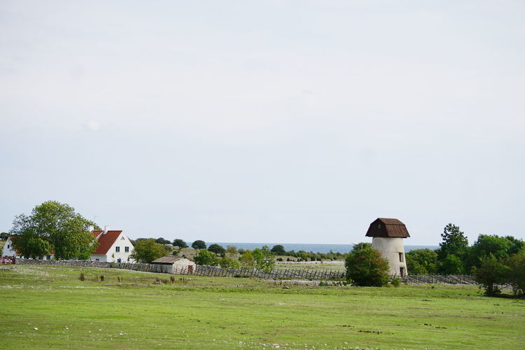 Fårö landscape Country Farm Farmland Architecture Building Exterior Built Structure Cattle Countryside Day Domestic Domestic Animals Environment Field Grass Green Color House Land Landscape Livestock Nature No People Outdoors Plant Sky Tree