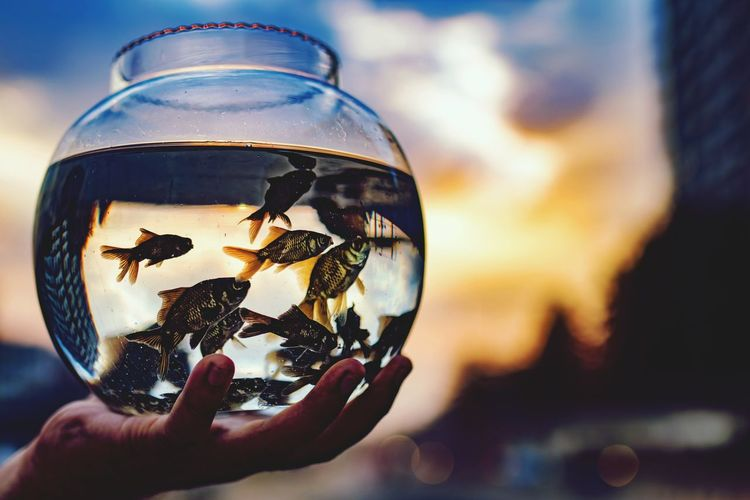It might be our world Water Wineglass Drink Alcohol Space Drinking Glass Wine Close-up Sky Fishbowl Fish Tank Goldfish Planet Earth Animals In Captivity Fish Aquarium Clown Fish Planet - Space