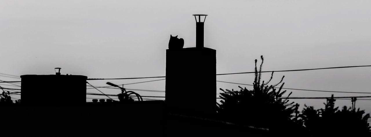 Cat on the chimney Cat Chimney Cat On The Chimney Black And White Blackandwhite Nocolours BLackCat