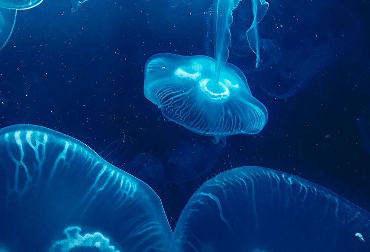 Relax … Diving Snorkeling Ambient Animal Animal Themes Animals In The Wild Aqua Aquarium Aquarium Life Aquarium Photography Blue Chill Close-up Darkblue Day Deep Jelly Jellyfish Lavalamp Mood Nature No People Outdoors Relax Sea Life Swimming UnderSea Underwater Water