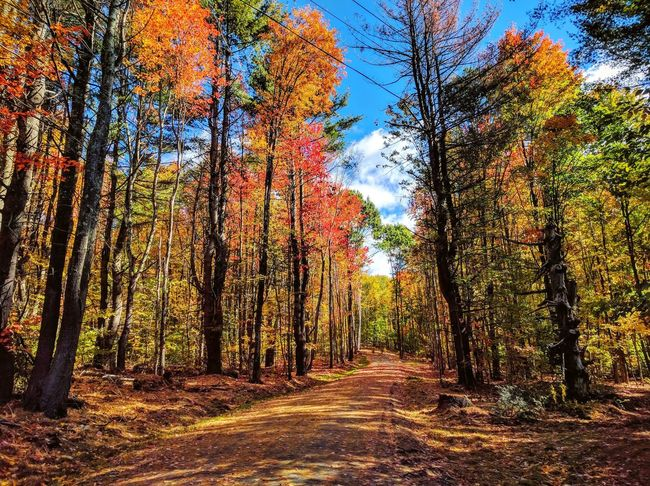Tree Nature Sky No People Sunlight Tranquility Growth Multi Colored Outdoors Day Forest Beauty In Nature Scenics Fall Colors Hills Vermont_tourism Vermont Beauty In Nature Cloud - Sky Landscape Fall Trees Travel