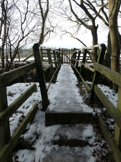 Step up EyeEm Selects Nature Tree Plant The Way Forward Day Direction Tranquility Water Railing Winter No People Diminishing Perspective Tranquil Scene Architecture Snow Footpath Built Structure Sky Outdoors