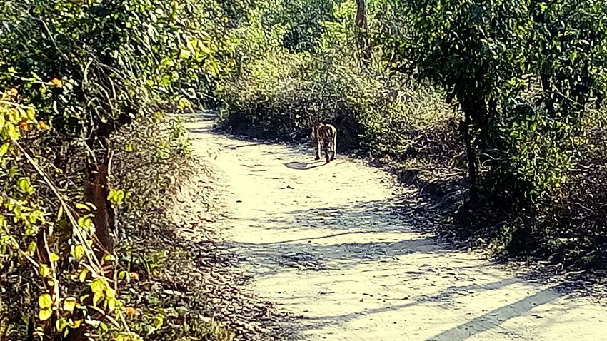What an amazing experiance when you see the tiger in a jungle... The most memorable trip in a jungle.. Tigers❤ JungleExperience JimCorbettNationalPark Adventure Is Out There Wesawthetiger