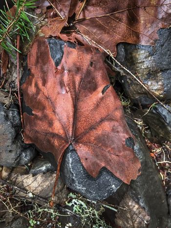 Leaf Nature Outdoors Close-up Leaves Beauty In Nature Brown Natural Collages Abstractions Scenics Textured  Shapes And Forms Layers And Textures Stones Abstract Nature Pattern Patterns In Nature