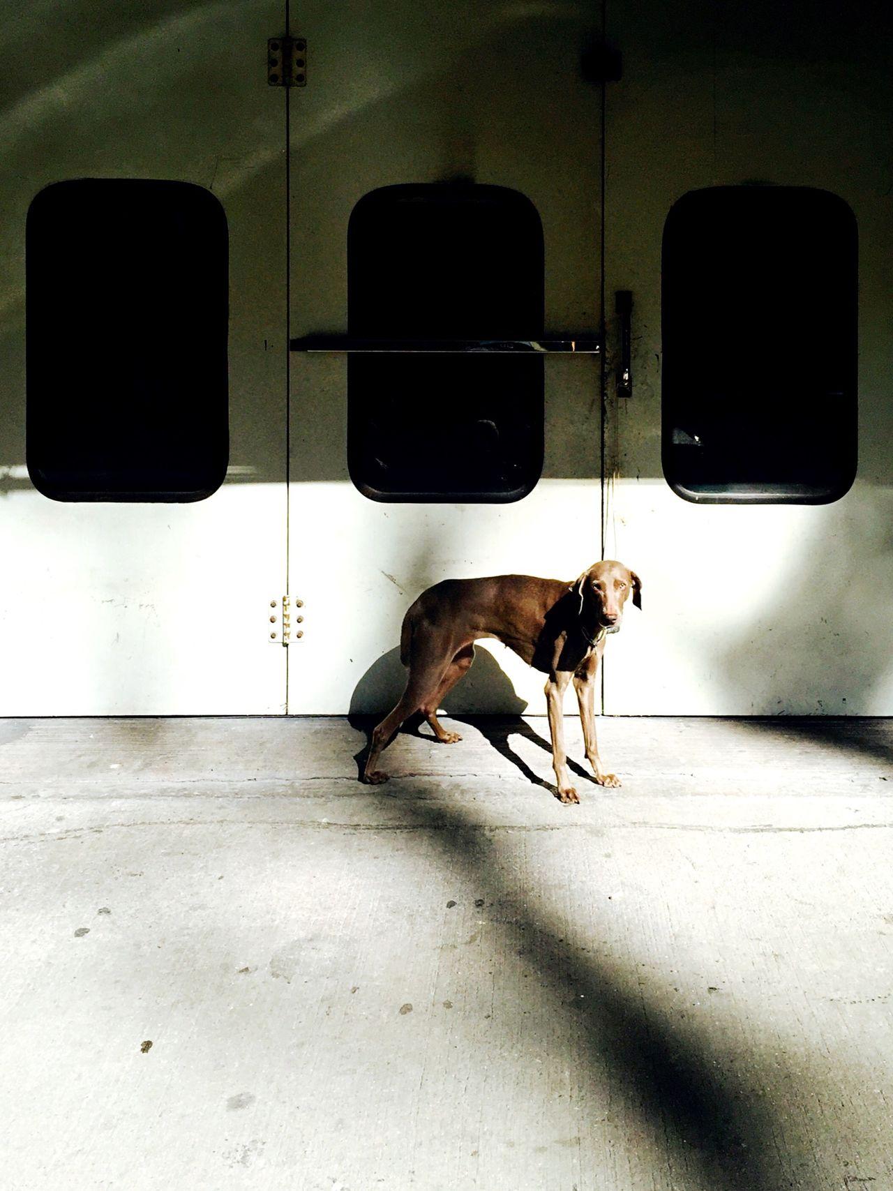 Dog on walkway
