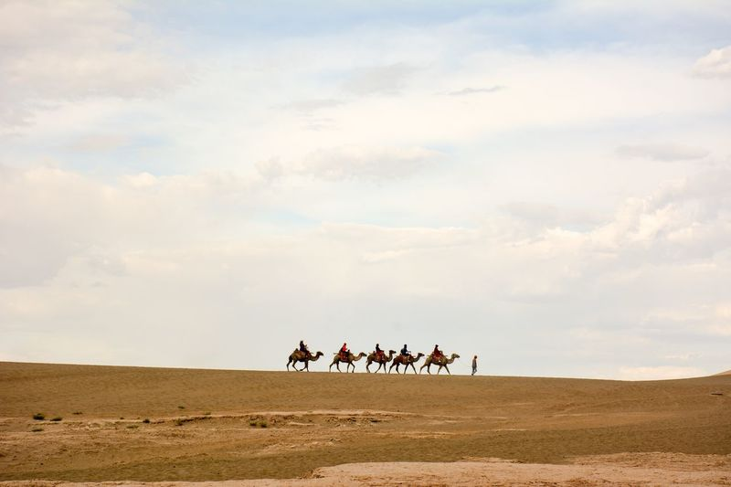 People riding on camels in desert against sky