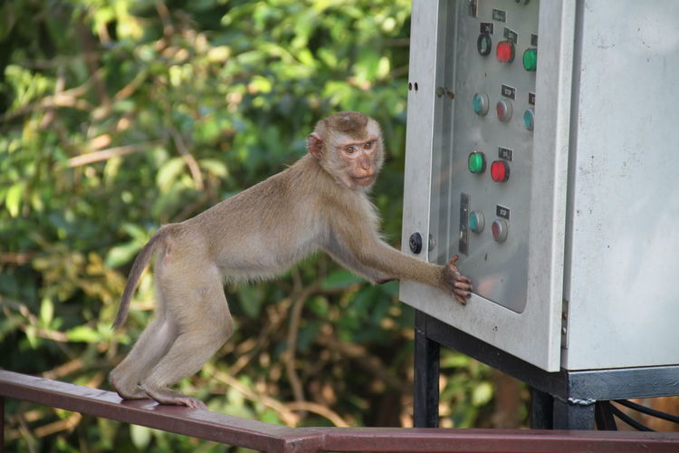 Monkey On Railing By Electric Equipment