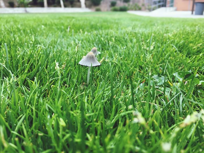 Cute lil mushroom Grass Green Color Plant Growth Animal Field Selective Focus Day Close-up Outdoors Grass Area Beauty In Nature Nature No People Land
