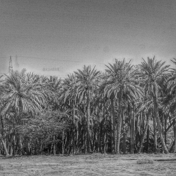 https://www.instagram.com/p/BAv70sEgcFj/ ارشيفيه نخل الربيعية القصيم تصويري  نخلة منظر لقطة طبيعة منظر_جميل جميل رائع خيالي اشجار شجر طبيعي قريتي مزرعة المزرعة صبحهم_بالخير ابيض_واسود ابيض_و_اسود ابيض_اسود ابيض و اسود الناس_الرايقه