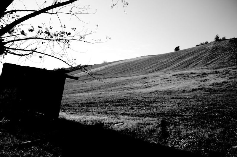 Landscapes in Marche Autumn Panorama The Week On EyeEm Tree Animal Themes Backgrounds Beauty In Nature Blackandwhite Clear Sky Day Field Grass Landscape Nature No People Outdoors Scenics Silhouette Sky Sun Tranquil Scene Tranquility Tree