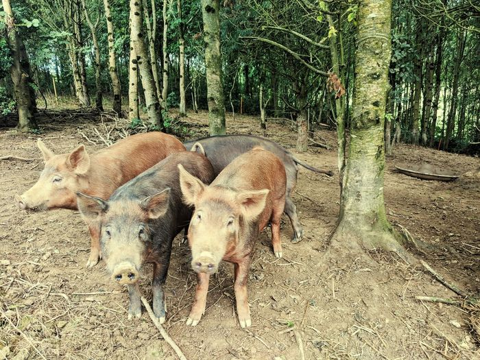View of animal on field in forest