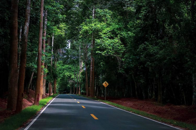 Cambodia Forest Angkor Wat Angkor Tree Plant Road The Way Forward Direction Transportation Sign Symbol Marking Road Marking Nature Diminishing Perspective No People Growth Green Color Tranquility Empty Road Beauty In Nature vanishing point Day My Best Travel Photo