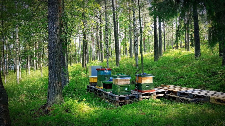 beekeeping in a