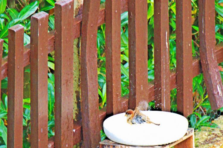 Gartenvögel Haussperling Sperling Wood - Material Vogelbad Tree Plant Perching Outdoors One Animal No People Nature Mammal Leaf Day Close-up Bird Animals In The Wild Animal Wildlife Animal Themes Sperling Beim Baden EyeEmNewHere