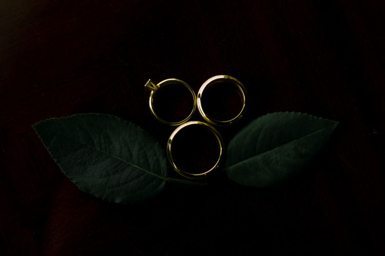 Close-up of rings on leaves against black background