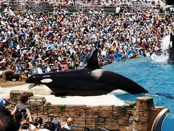 A6000 Audience Crowd Killer Whale Large Group Of People Sigma19mmArt