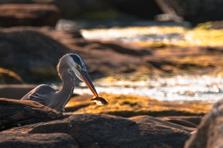 View of bird on rock at beach