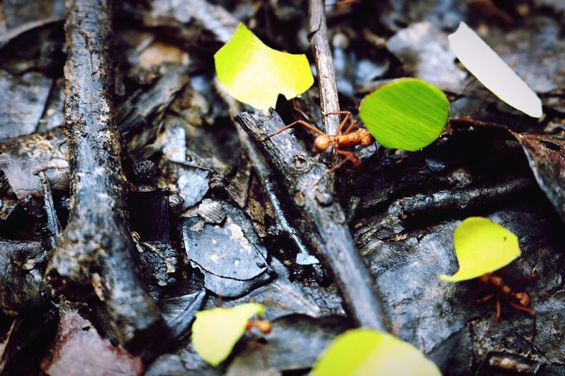 Red Ant First Eyeem Photo