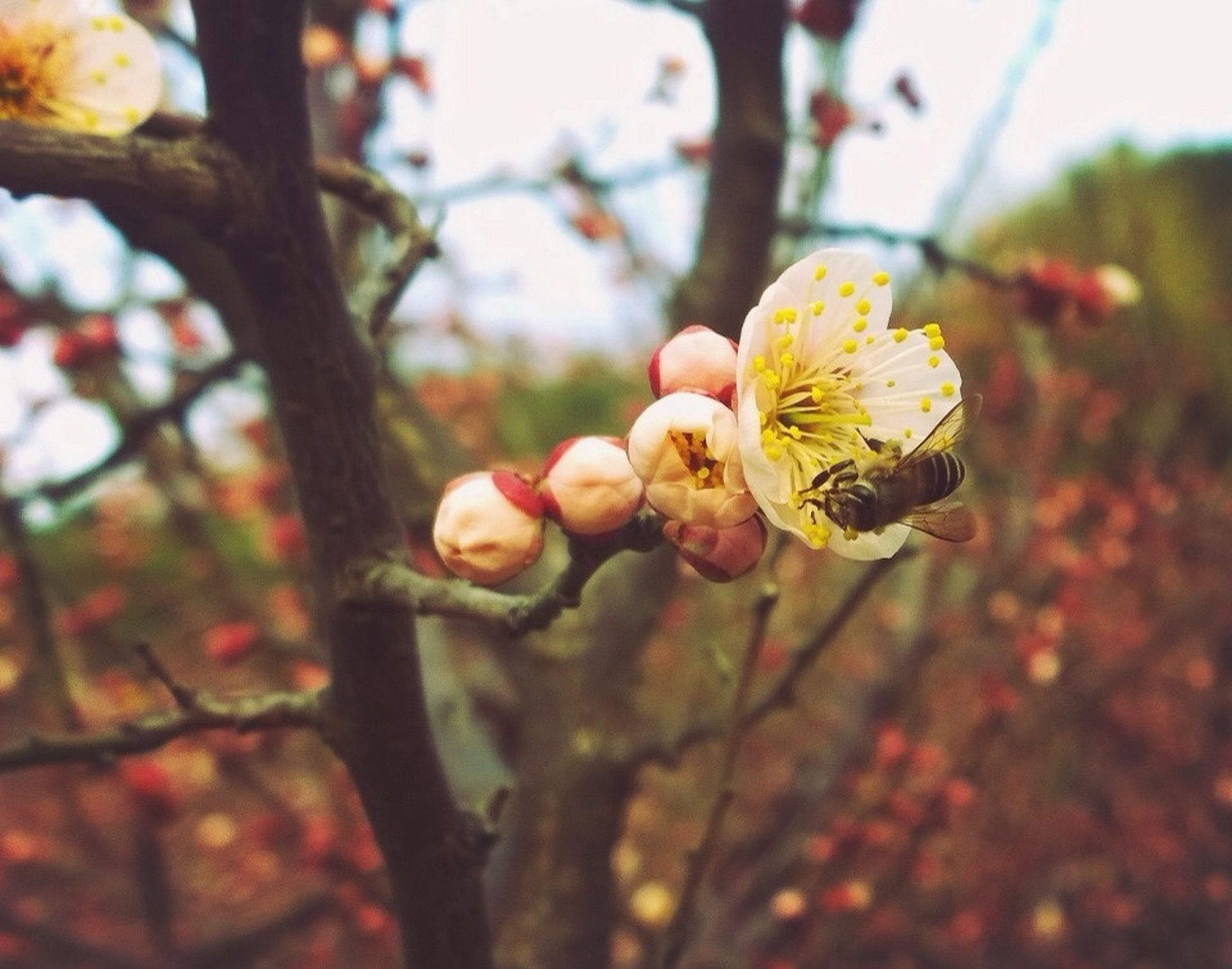 flower, tree, branch, growth, freshness, focus on foreground, close-up, fragility, nature, beauty in nature, petal, blossom, selective focus, bud, flower head, outdoors, day, no people, springtime, twig