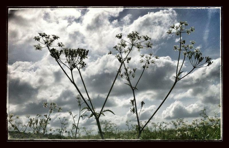 #sunset #sun #clouds #skylovers #sky #nature #beautifulinnature #naturalbeauty #photography #landscape #sunset #sun #clouds #skylovers #skyporn #sky #beautiful #sunset #clouds And Sky #beach #sun _collection #sunst And Clouds EyeEm Best Shots EyeEm Gallery