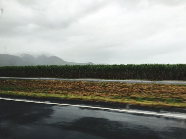 Sugarcane Field Sugar Sugarcane Cairns Road Fromcarwindow Car View Clouds Cloud Clouds And Sky Foggy Mountains Mountain Rainforest The EyeEm Collection On The Way Showcase July Colour Of Life Pivotal Ideas TakeoverContrast My Year My View Finding New Frontiers Perspectives On Nature