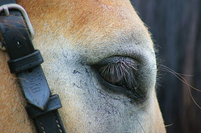 Horse Horse Eye Animal Animal Head  Nature Horses Detail Fine Art Fine Art Photography Horse Photography  Love Animals Ladyphotographerofthemonth One Animal Outdoors Silhouette Scenics Romantic Animal Themes Part Of Animal Head  Animal Focus On Foreground No People Zoology