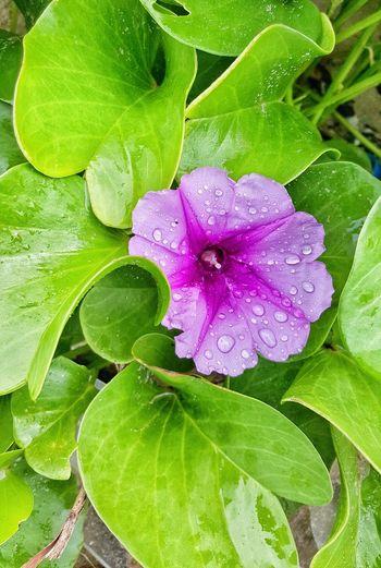 Flower Nature Green Color Thailand EyeEm Gallery Beautiful ♥ Travels Travel Statue Thailand Garden