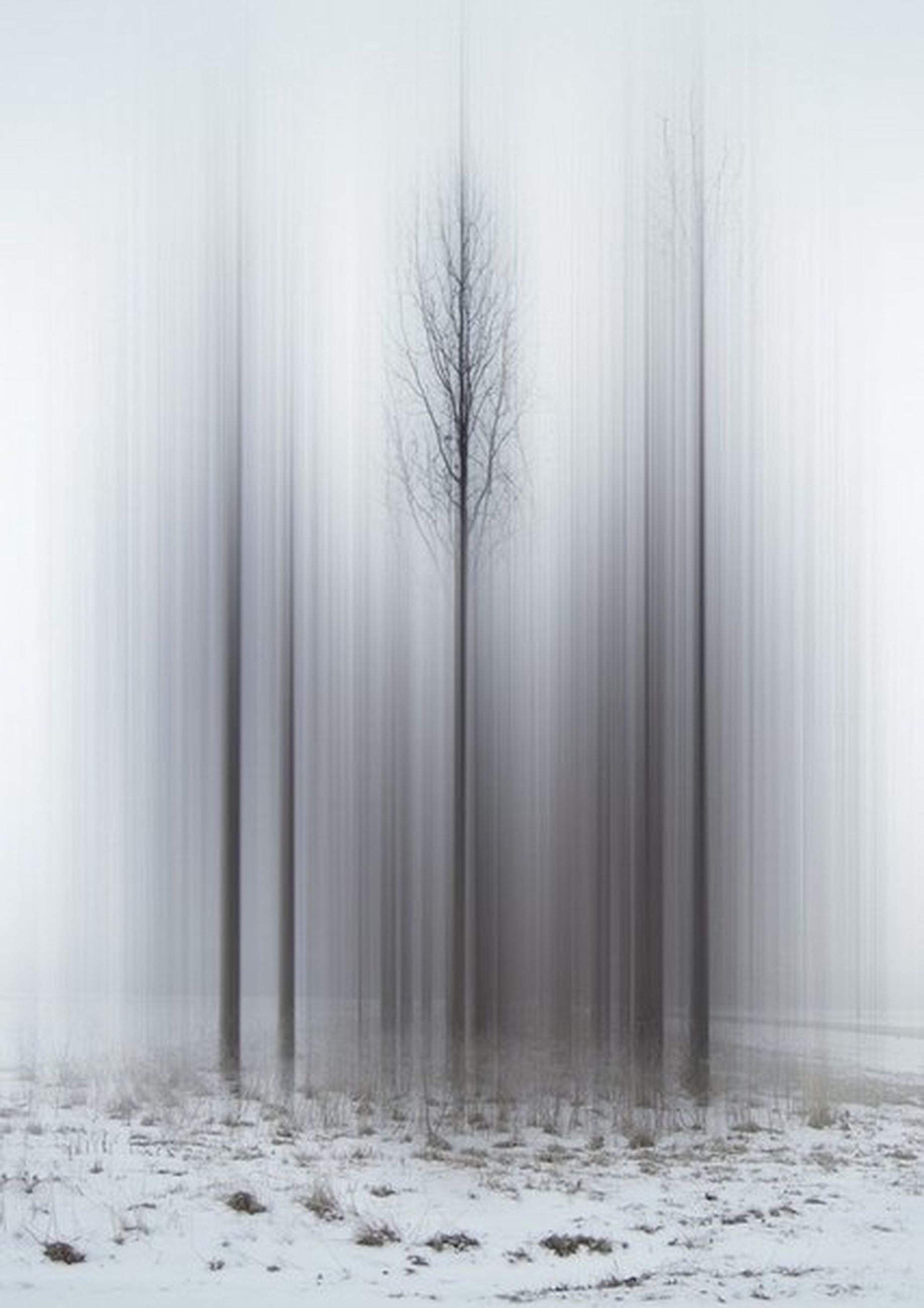 fog, foggy, winter, weather, tree, tranquility, cold temperature, tranquil scene, snow, scenics, beauty in nature, nature, tree trunk, bare tree, woodland, mist, season, forest, landscape