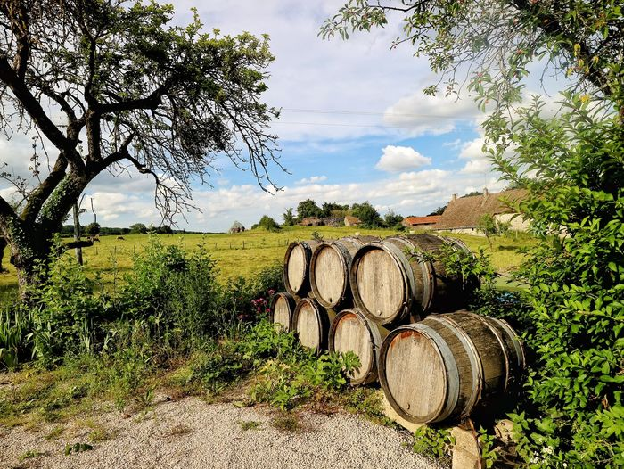 Barrel Cellar Cloud - Sky Cylinder Day Environment Field Growth Land Landscape Nature No People Outdoors Plant Sky Stack Tree Wine Wine Cask Winemaking Winery Wood - Material