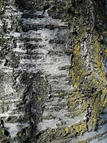 Full Frame Backgrounds No People Textured  Close-up Outdoors Day Nature Textures And Surfaces Pattern, Texture, Shape And Form Patterns & Textures Textures In Nature Tree Trunk Tree Bark Grey And Yellow