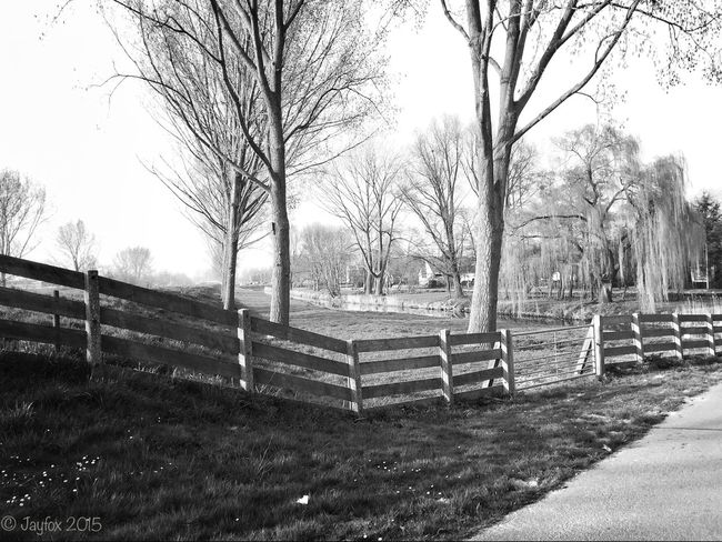 Iphoneonly IPhoneography Blackandwhite Blackandwhite Photography Trees Fence Nature