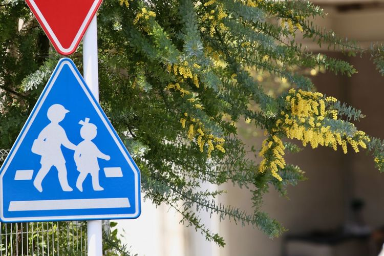 Close-up Day No People Outdoors Red Blue Yellow Sign Traffic Sign Tree Yellow Flower