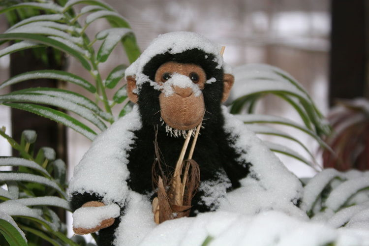 Close-Up Of Snow Covered Stuffed Monkey
