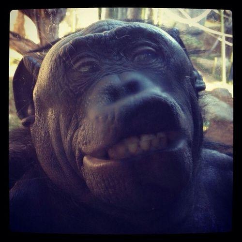 Gorilla You Looking At Me????